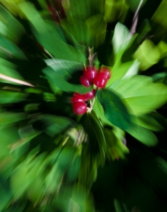 Berries in Motion