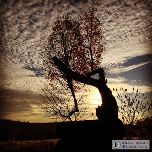 Yogic Tree