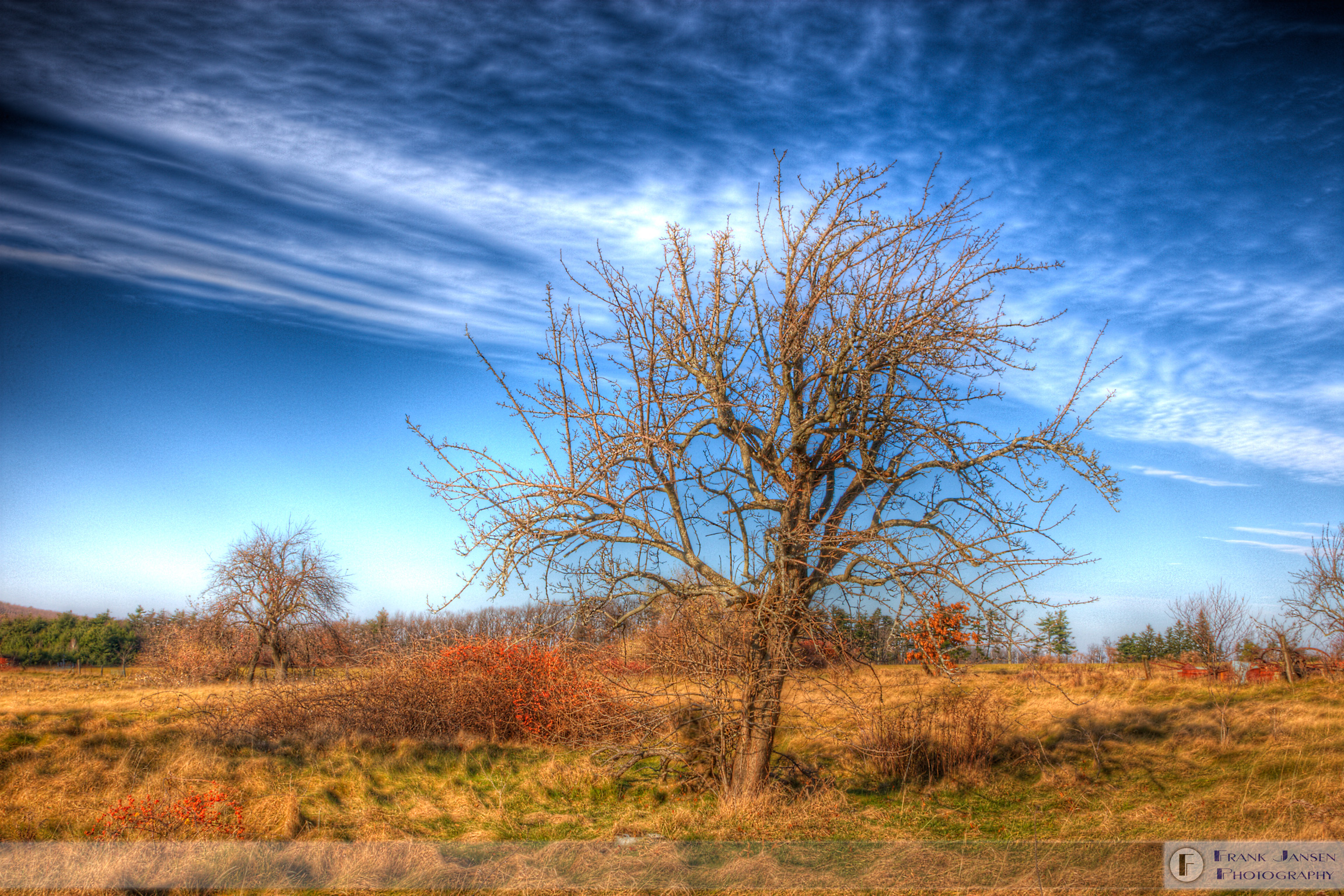 Persistence-Tree_14E6659_8_5_6_7-tumblr