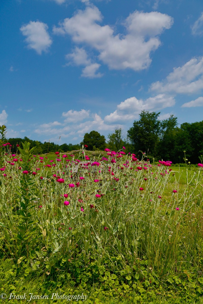 20150705-Tower-Hill_57A2279