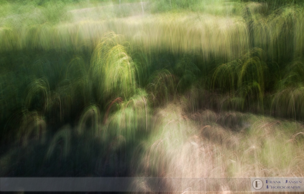 Faerie-Loops_MG_8664