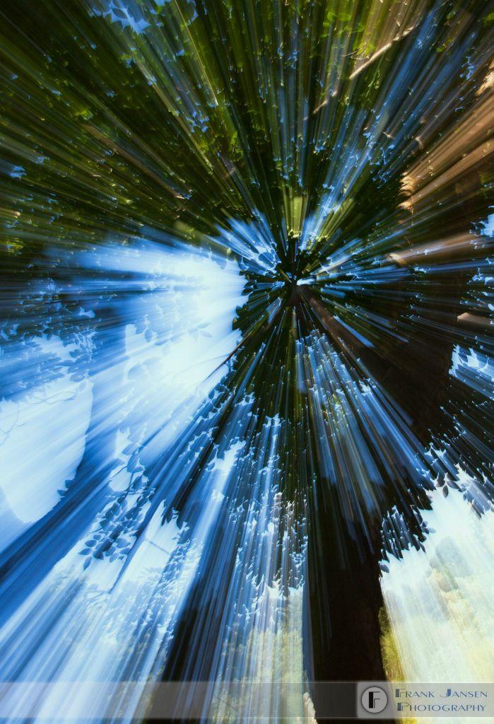 Wisdom-of-the-Trees
