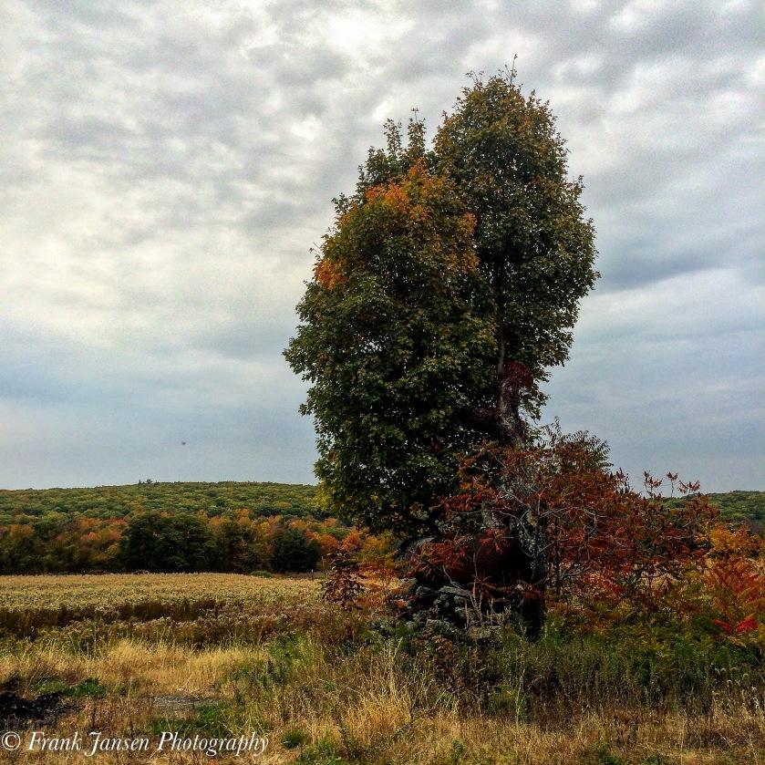 Yogatree-2015-10-21 08.07.30 HDR-1