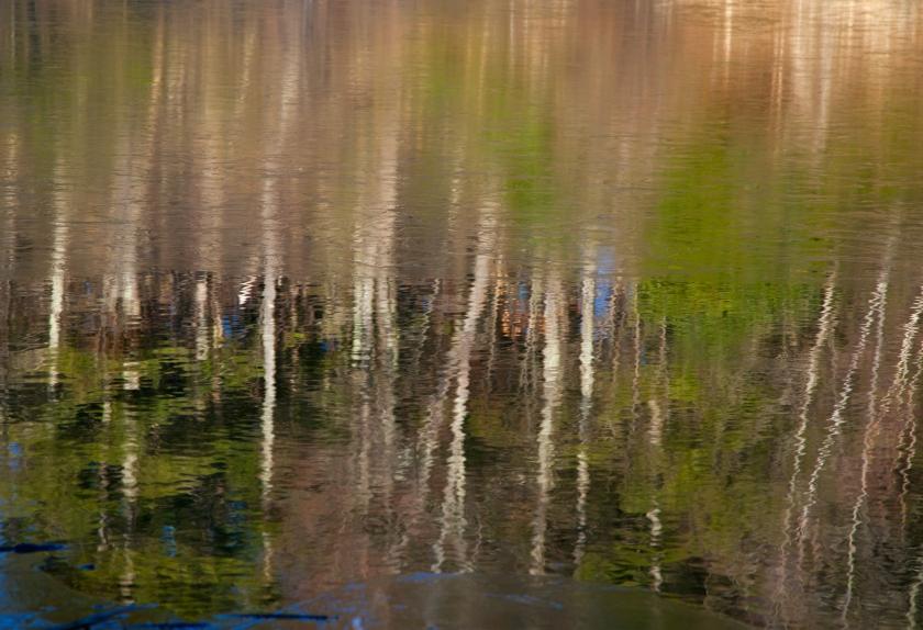 Landscape-110325_MG_6980