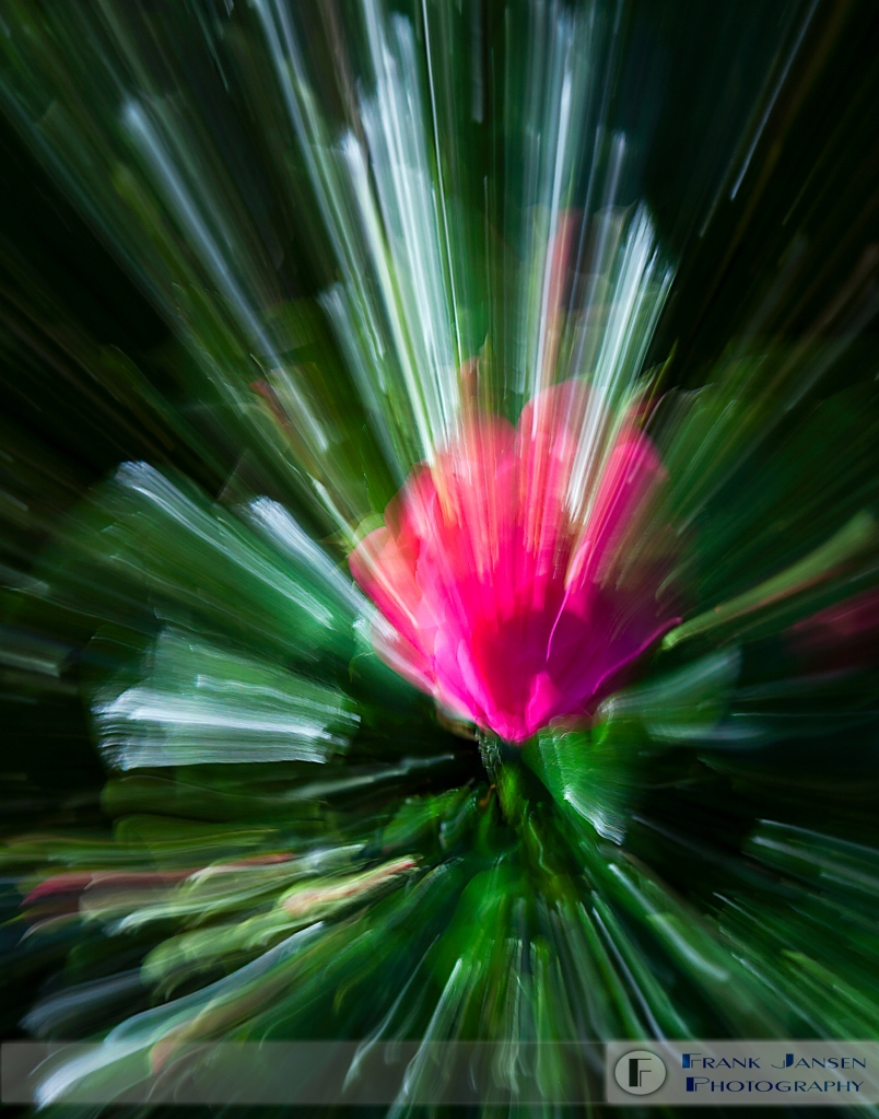 Rose-Particle-11x14_MG_8611