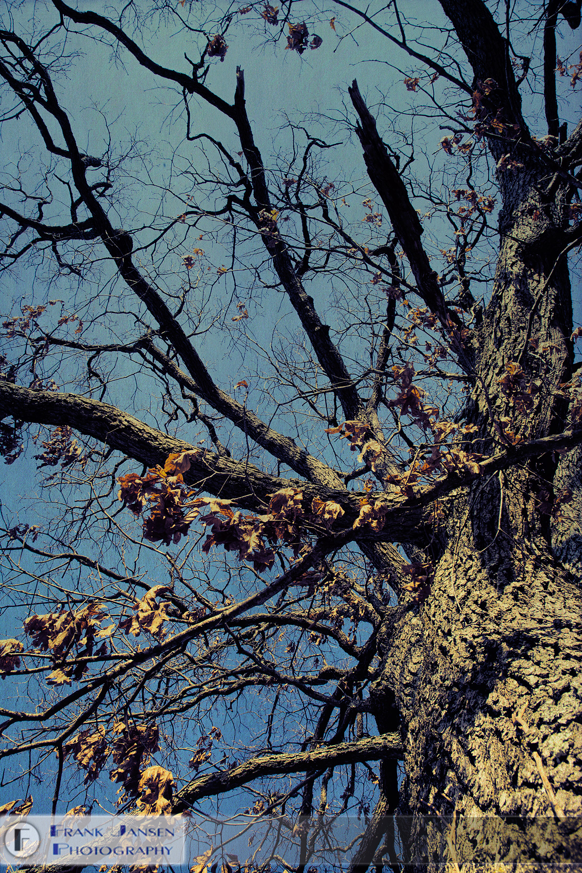 20120320-Groton-Bluesy-Trees_MG_3794