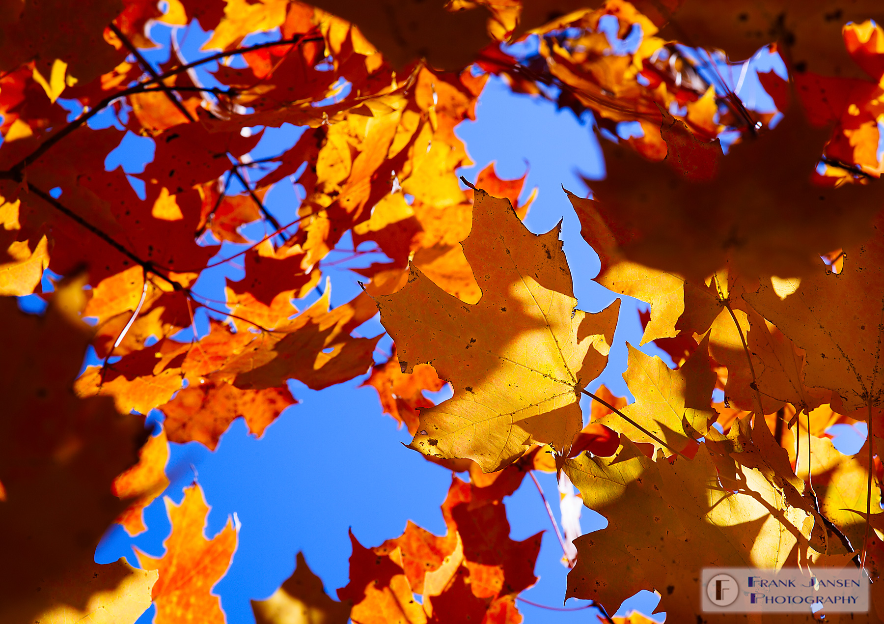 Autumn-Leaf_MG_9530-Edit