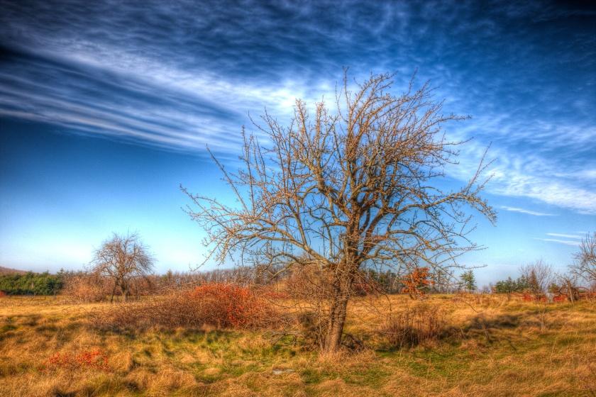 Persistence-Tree_14E6659_8_5_6_7