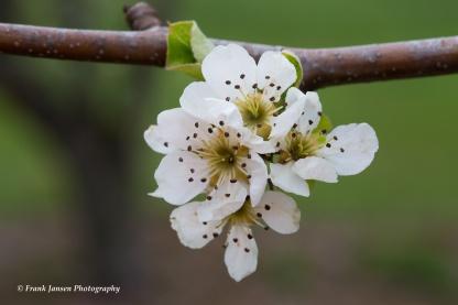 It's Spring!