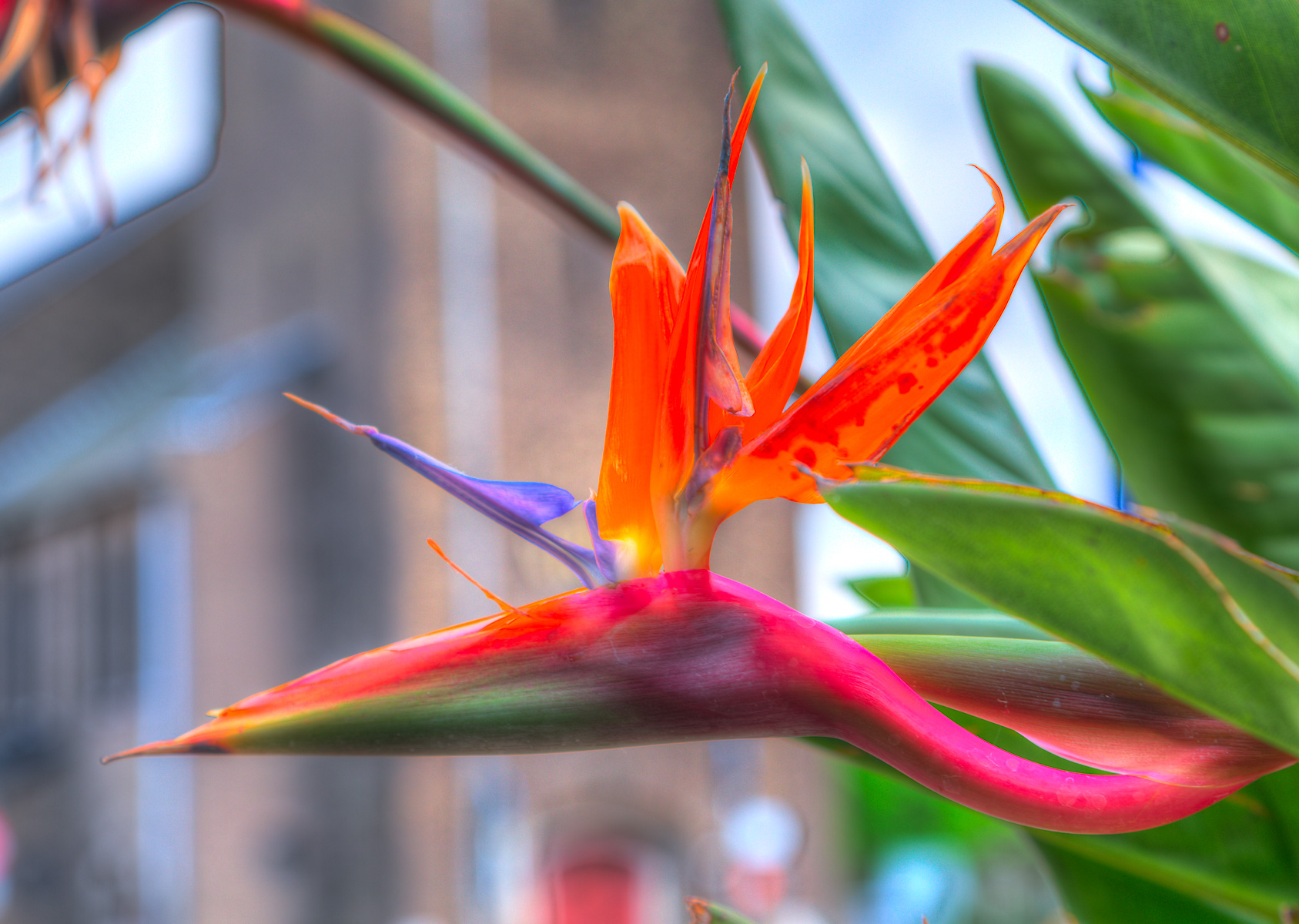 bird-of-paradise_57A1758_59_60_tonemapped