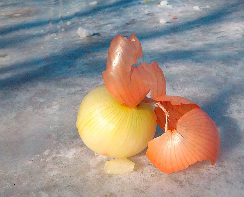 The-Lonely-Onion