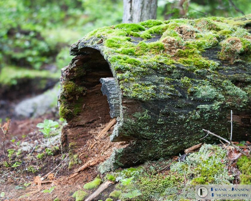 Mossy-Log-Baxter-20060604-LW4O2296