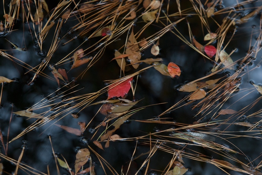 Pond-Scape_14E9974