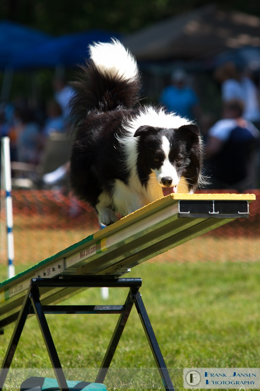 Border-Collie-20100531_14E3192.jpg