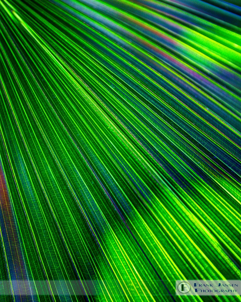 Palm-Leaf-Surreal-2_57A5983_4_5_16x20