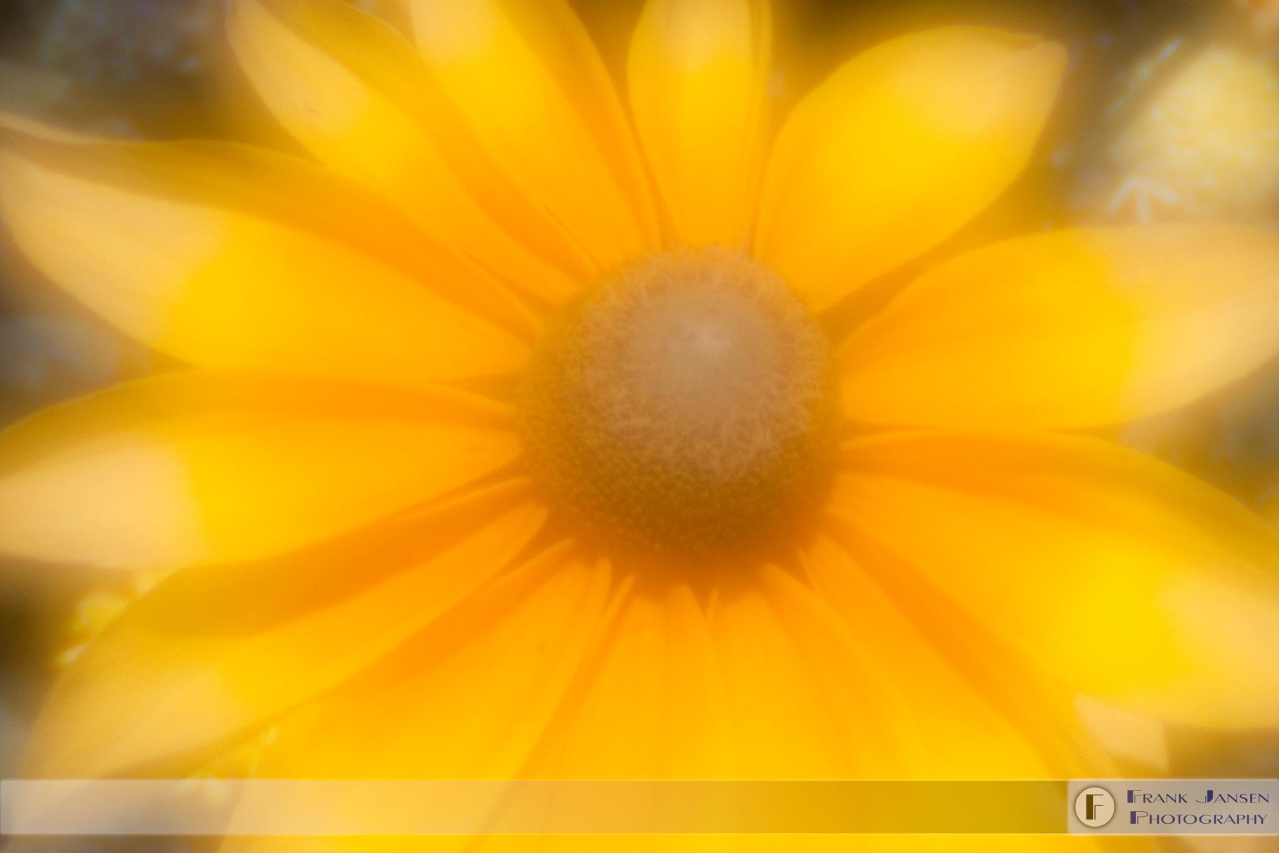 zone-plate-yellow-no1-12x18_14e0408