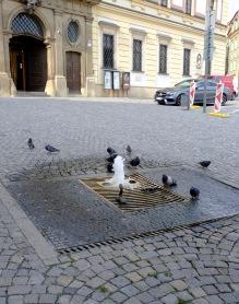 Pigeons playing