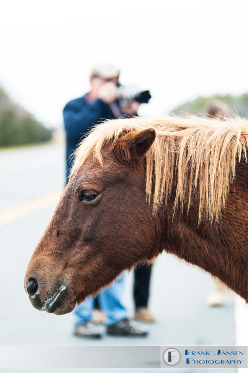Pony-and-Photographers_14E9914