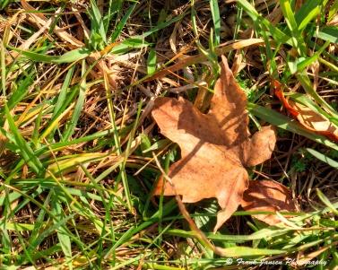 leaf_dsf0572_3_4_leaf-smooth_dsf0572_3_4