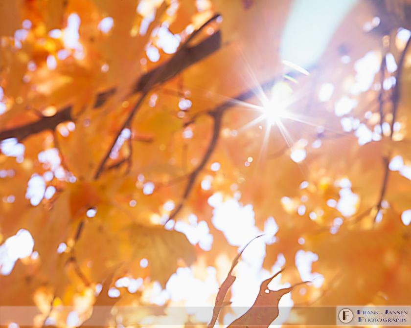 autumn-serenity_mg_9512