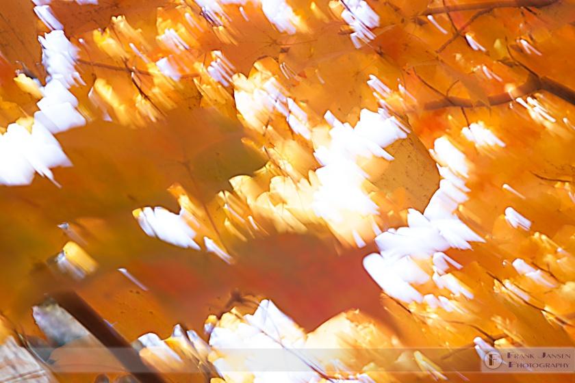 autumn-winds_mg_9518