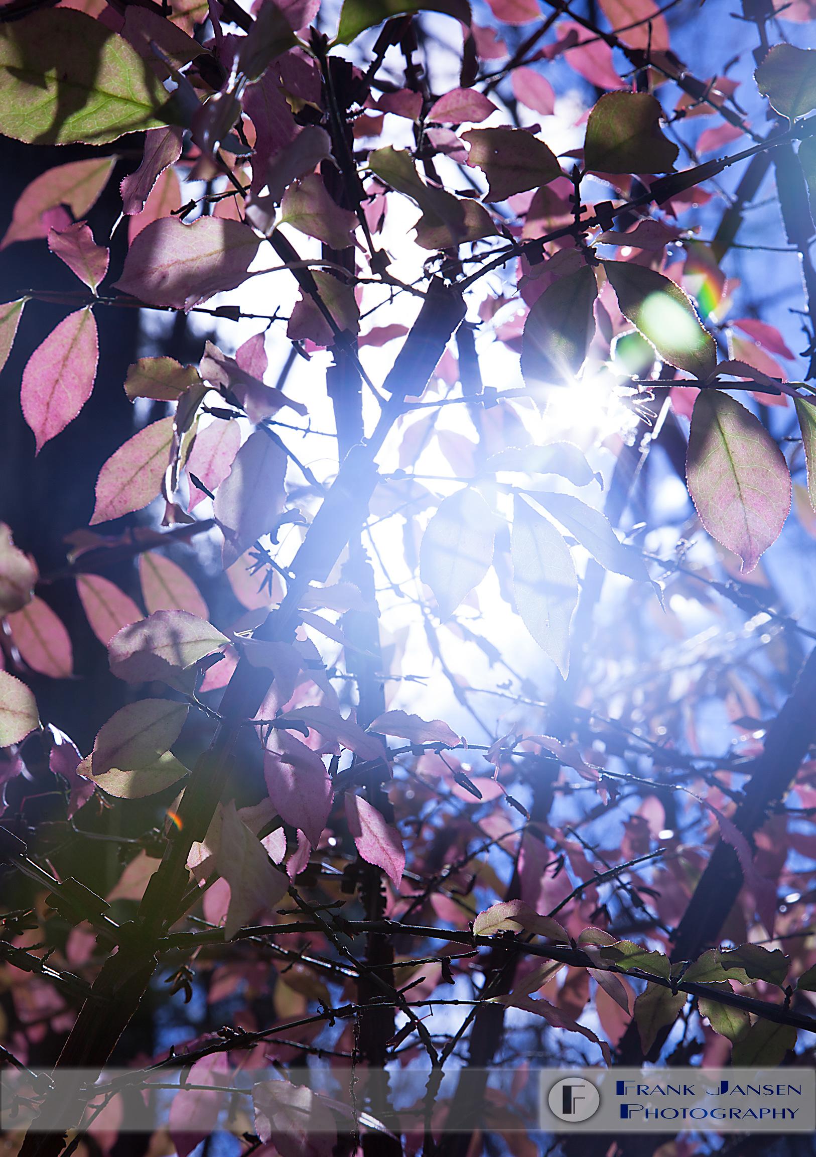 Autumn-Clarity_MG_9688-Crop