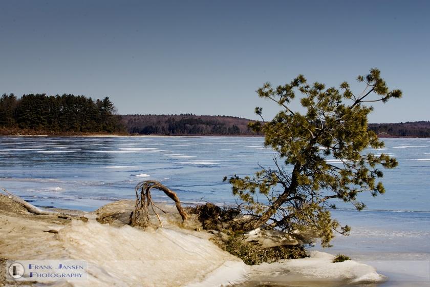 Frozen-Wachusett-Tree-lw4o8182