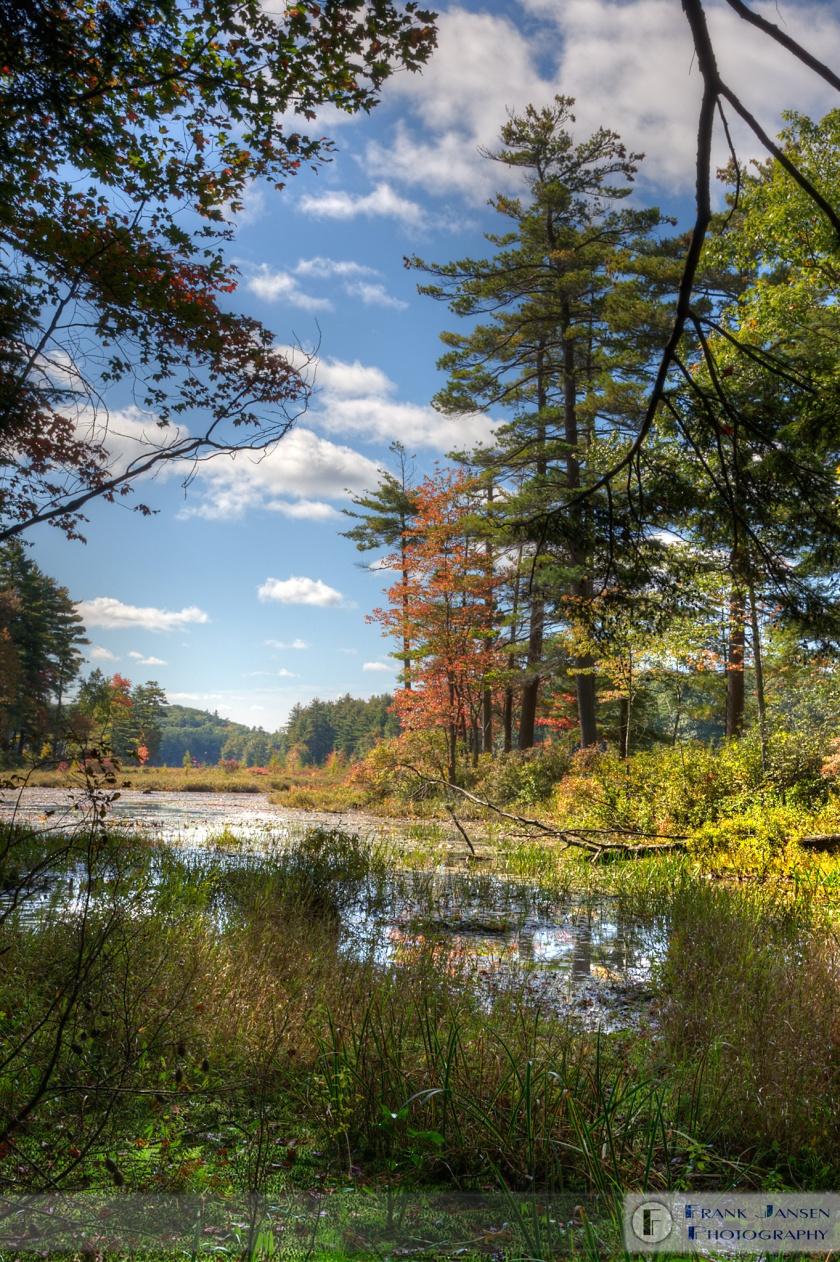 Harvard-Forest-Pond-Petersham_14E0575_6_4_7_8_tonemapped