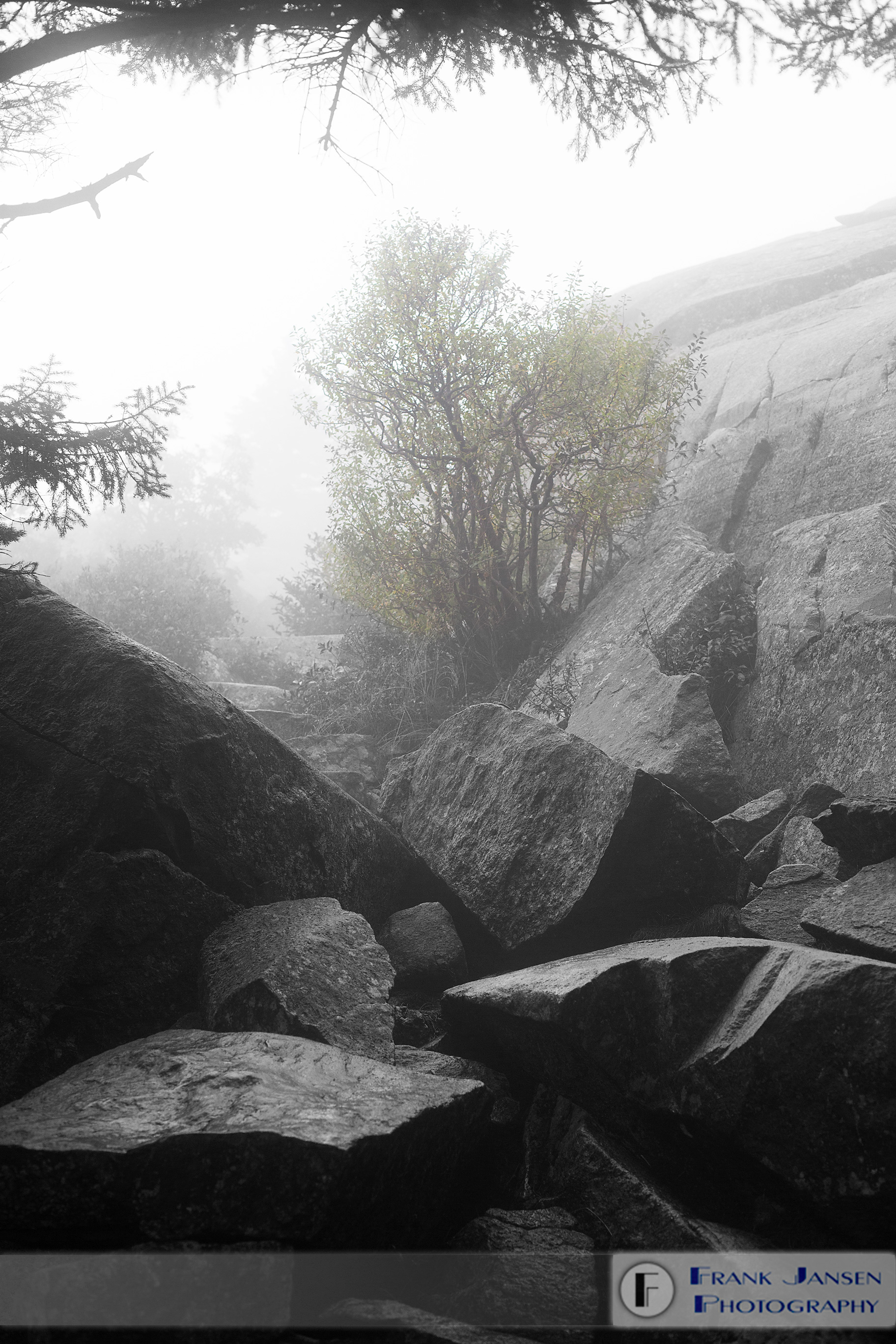 Foggy-Climb_57A3098