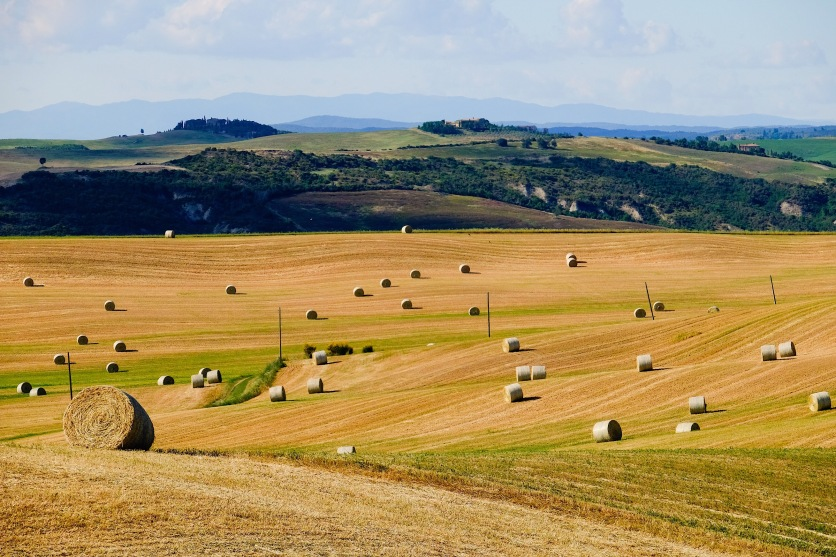 Tuscan Fields