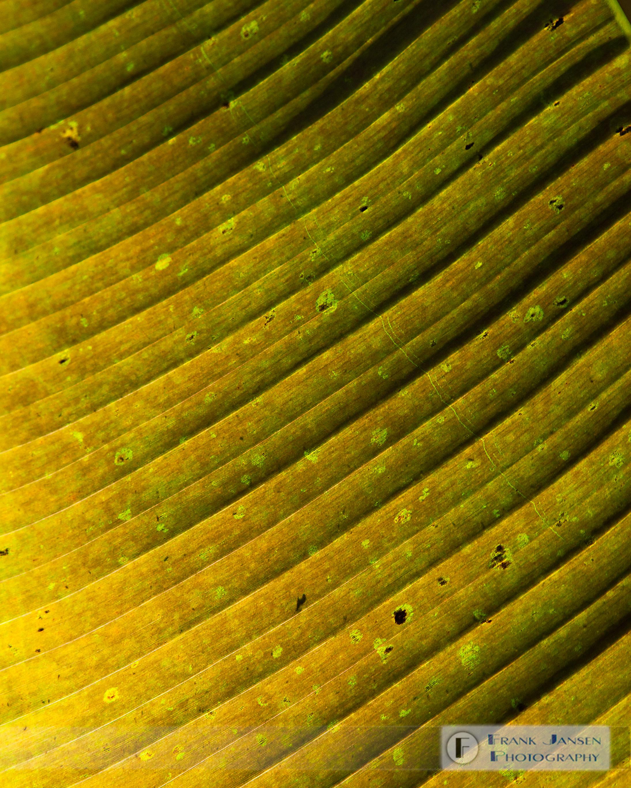 20100307-Leaf-Structure_14E0897
