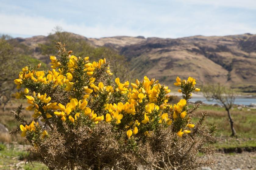 20130524-Scotland-2013_57A0424