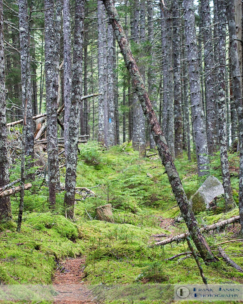 Forest-Path-Baxter-State-20060604-LW4O2297