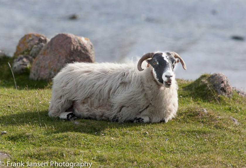 20130525-Scotland-2013_14E9557