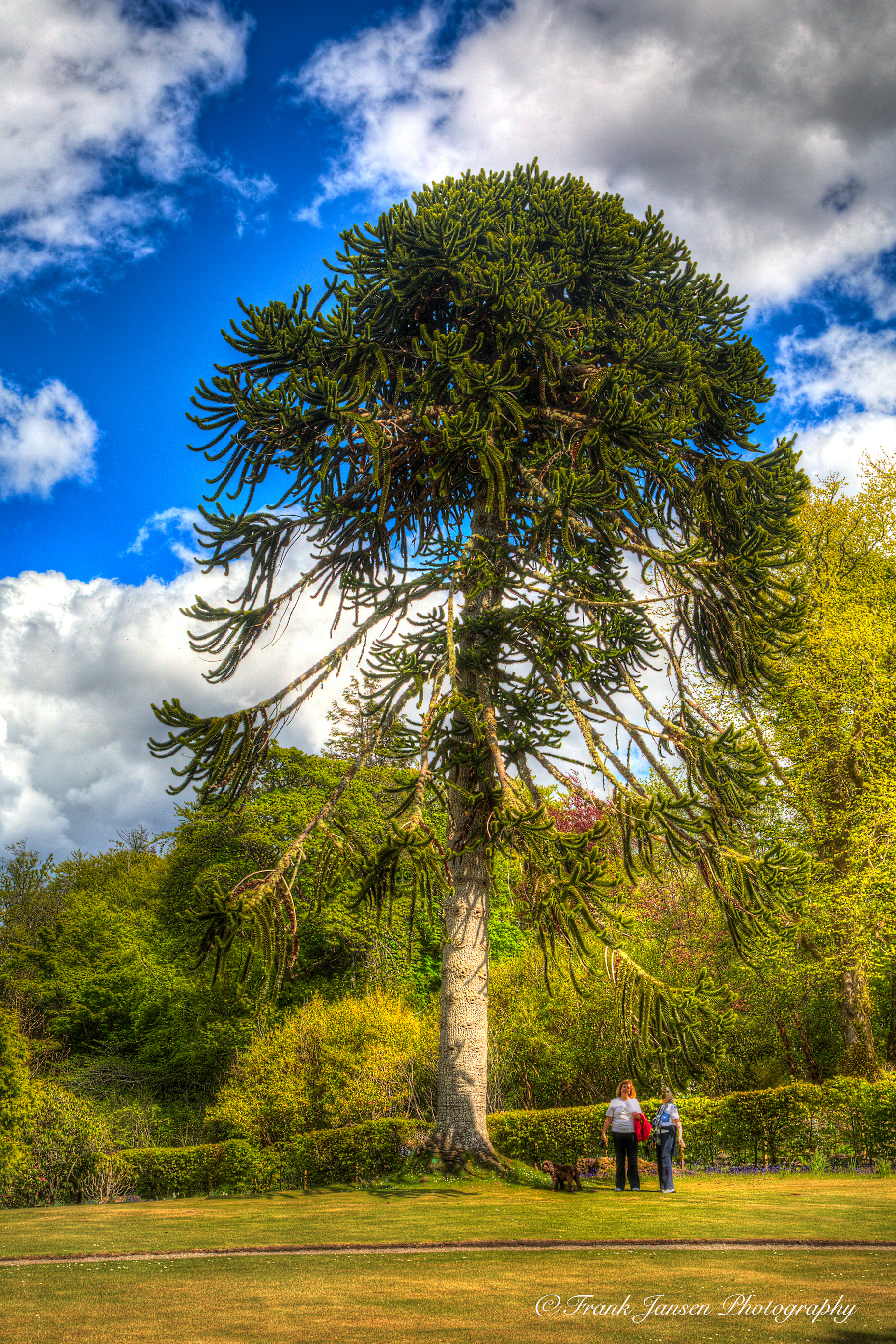 20130528-Skye-Dunvegan-Castle-Tree_57A0922_3_4_Enhancer