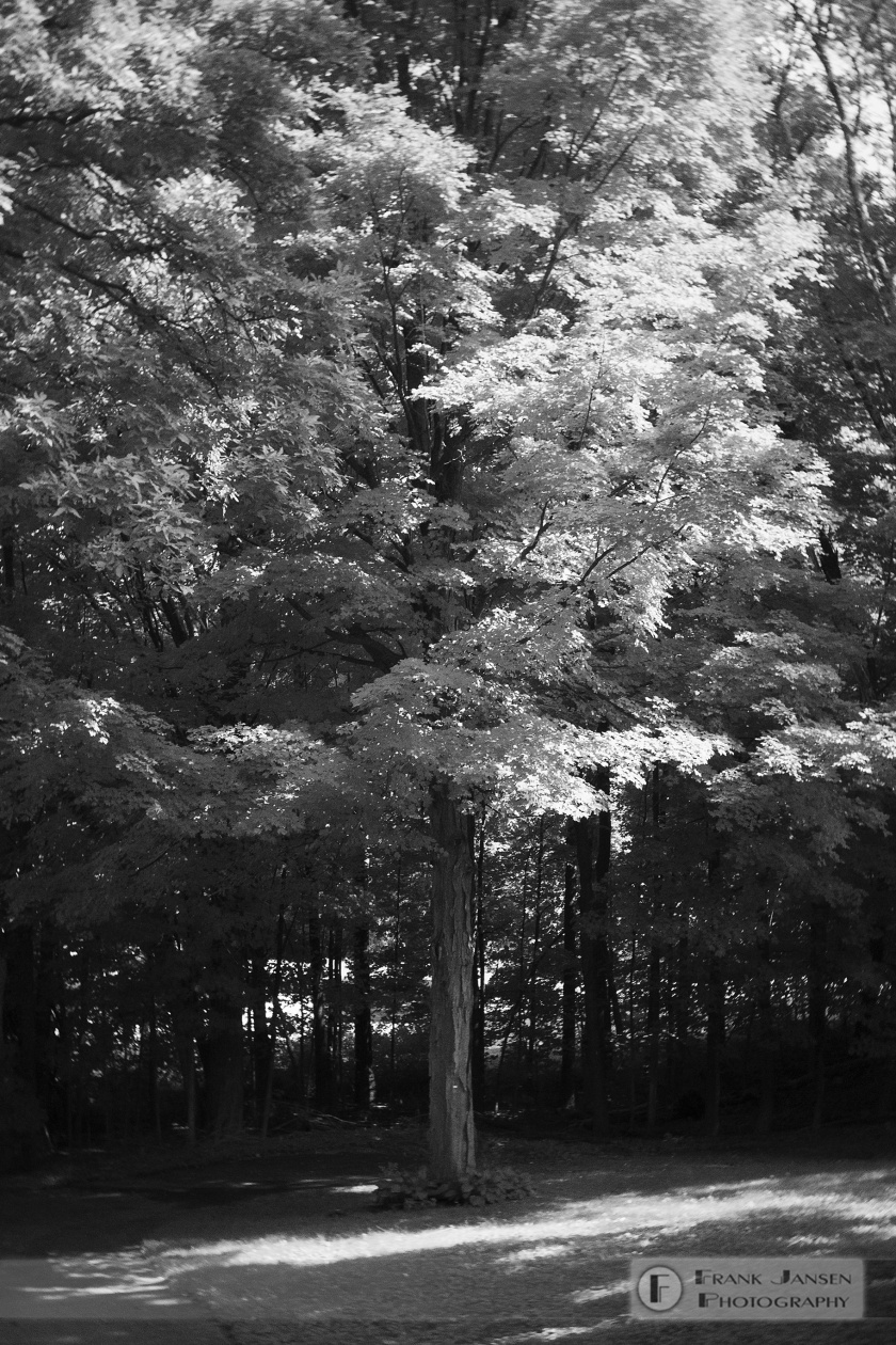 20180902-Backyard-Tree_DSF7122