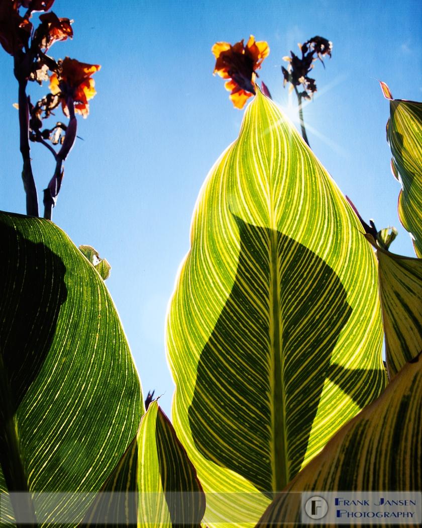 Leaf-Shadow_MG_8595
